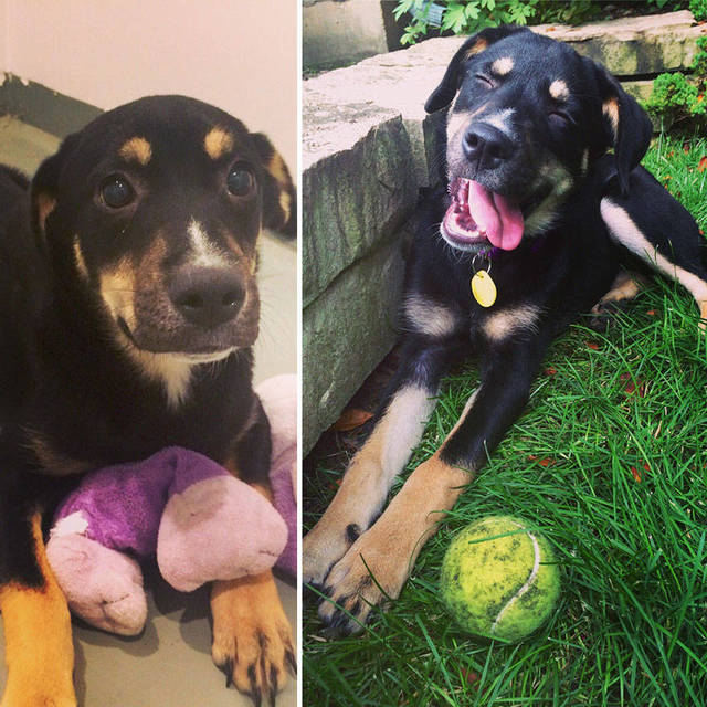 adoptions-chiens-heureux-01