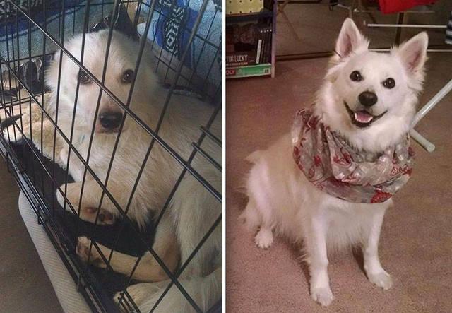 adoptions-chiens-heureux-06