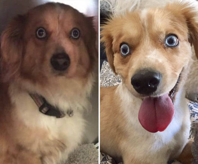 adoptions-chiens-heureux-17