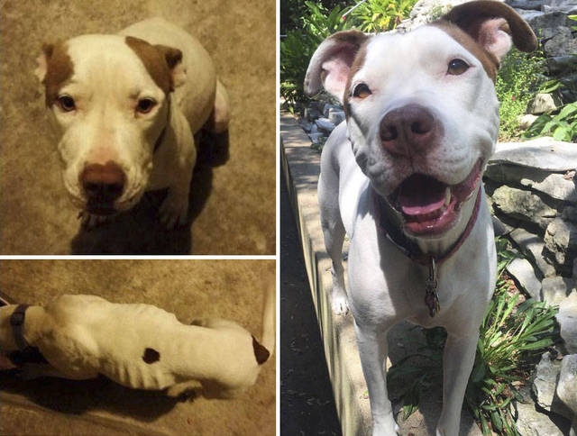 adoptions-chiens-heureux-19