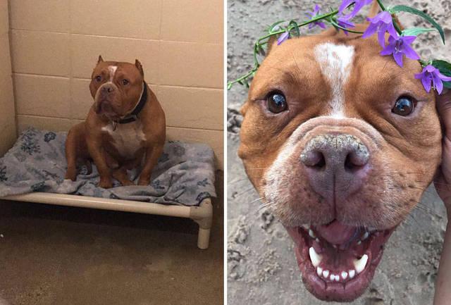 adoptions-chiens-heureux-30