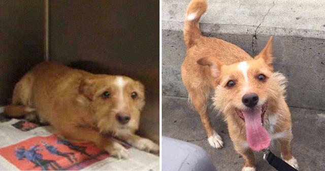 adoptions-chiens-heureux-37