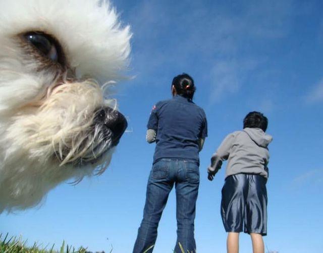 animaux-gachent-photo-11