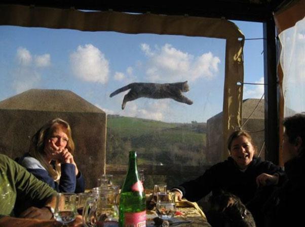 animaux-gachent-photo-18
