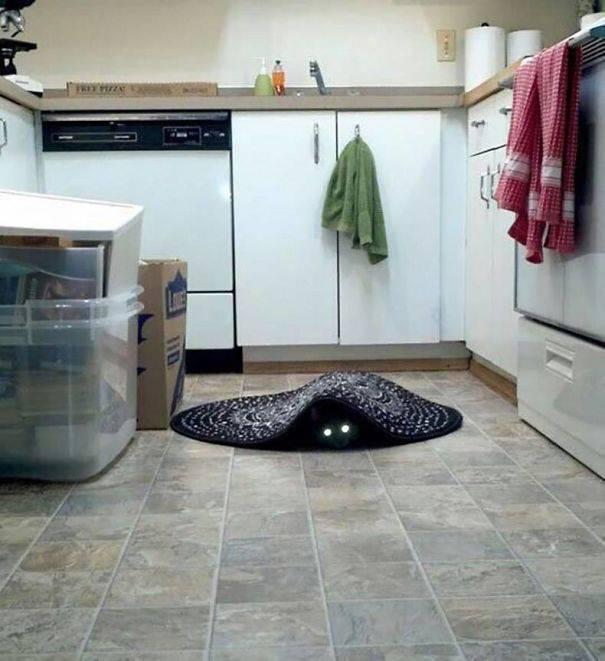 chats-diaboliques-02