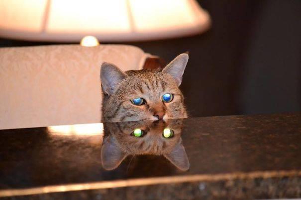 chats-diaboliques-05