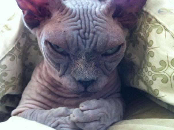chats-diaboliques-06