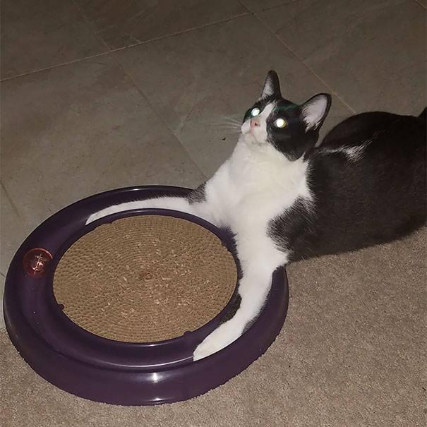 chats-diaboliques-18