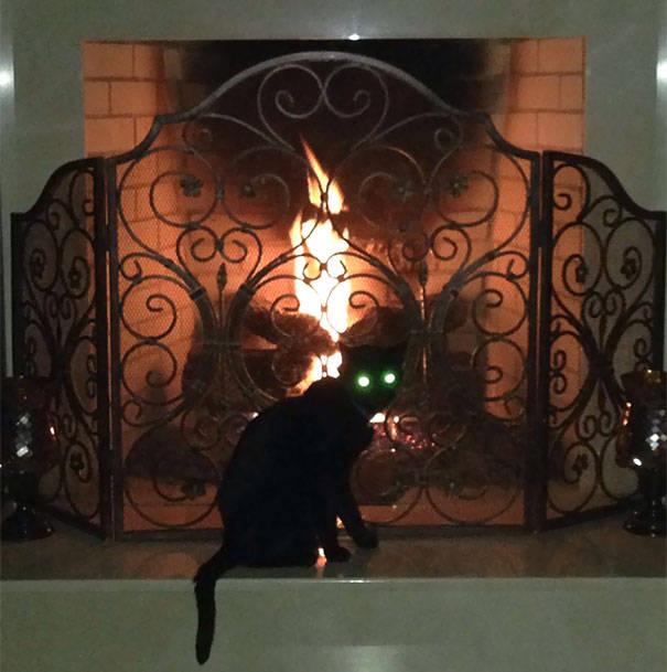 chats-diaboliques-21