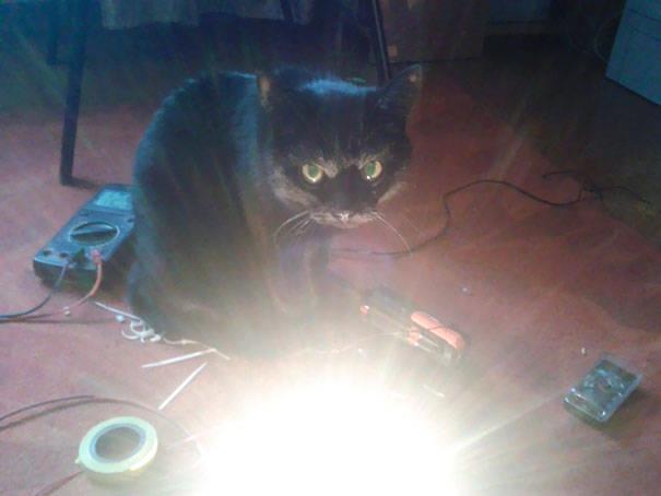 chats-diaboliques-25