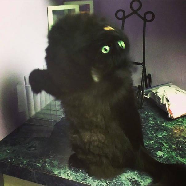 chats-diaboliques-27
