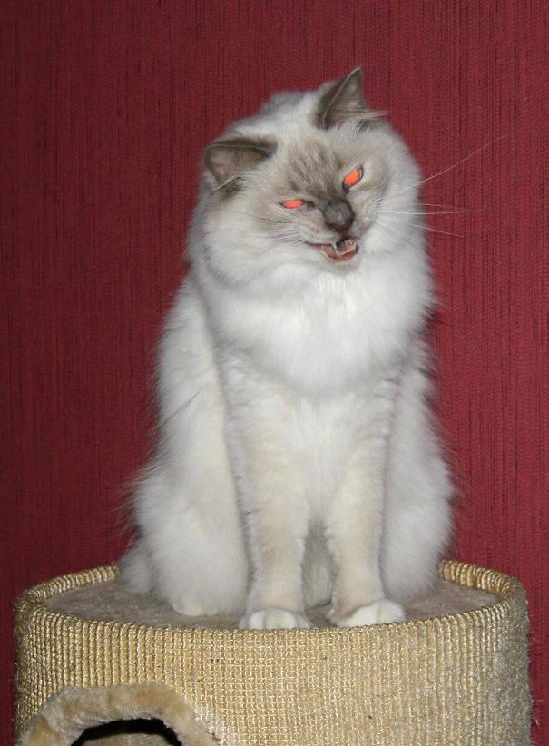 chats-diaboliques-29