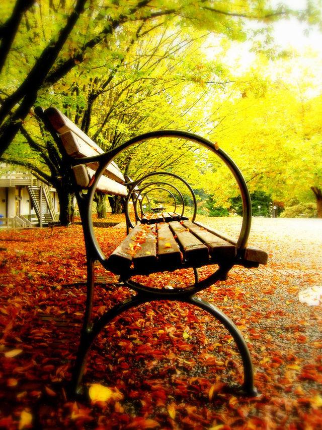 couleurs-automne-04