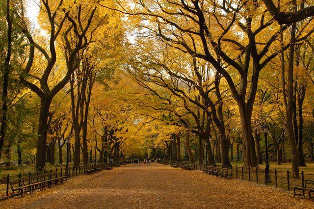couleurs-automne-13