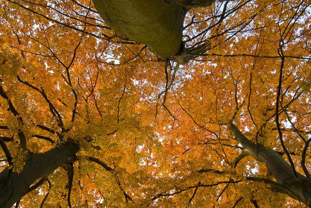 couleurs-automne-18