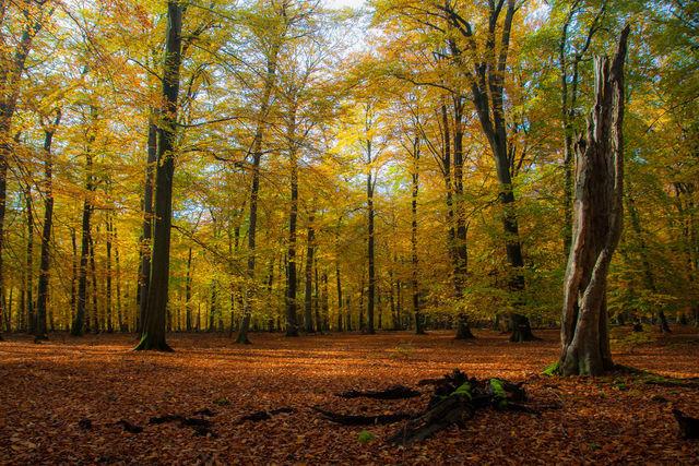 couleurs-automne-26