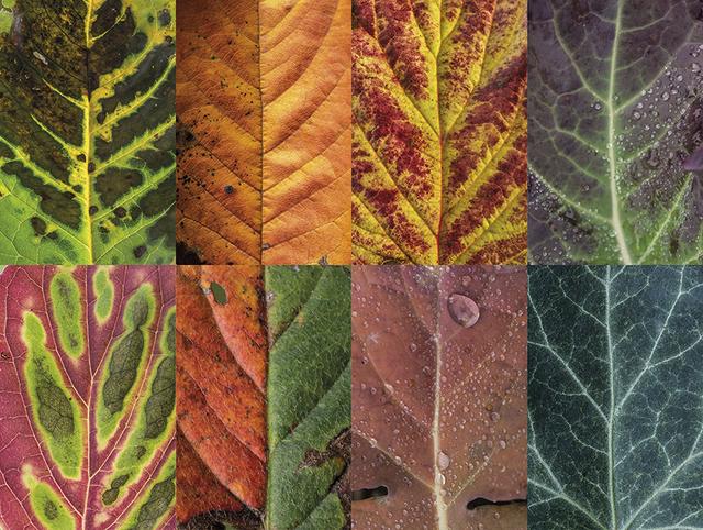 couleurs-feuilles-automne-01