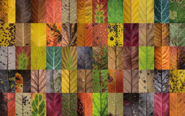 couleurs-feuilles-automne-07