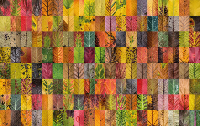 couleurs-feuilles-automne-08