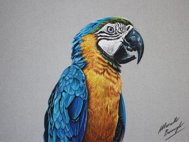 dessins-realistes-marcello-barenghi-05