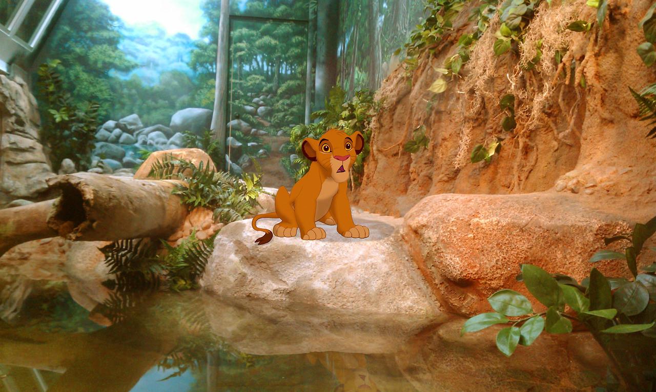 fin-malheureuse-films-disney-simba-roi-lion