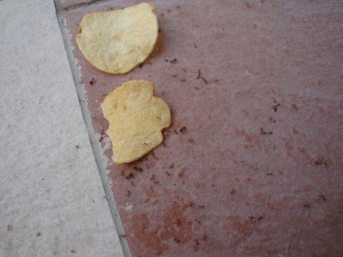 fourmis-chips-travail-equipe-09