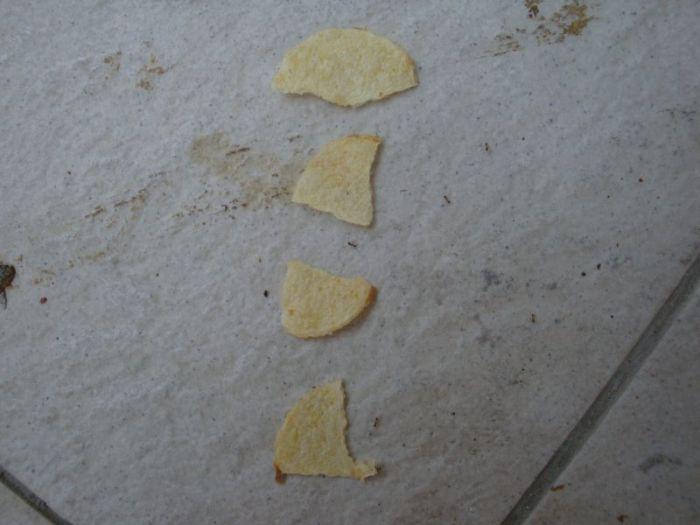 fourmis-chips-travail-equipe-12