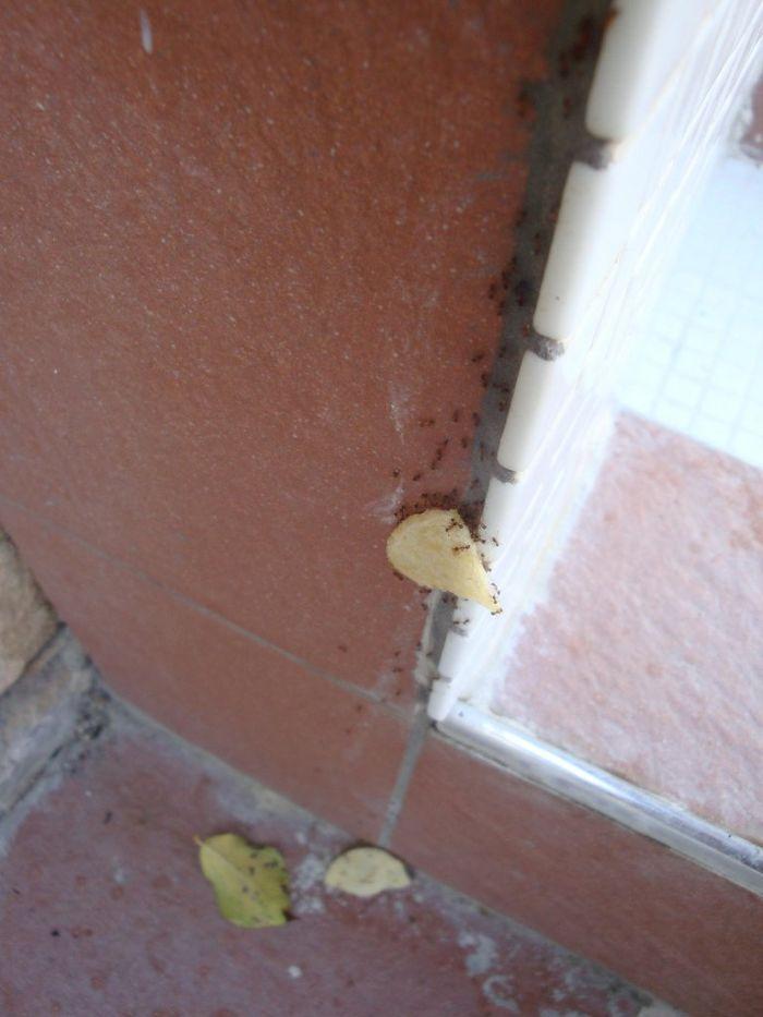 fourmis-chips-travail-equipe-19