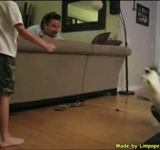 cat-kick-the-face