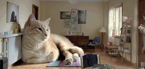 chat-enorme-dans-maison
