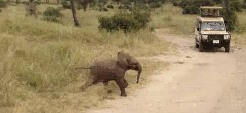 elephant-traverse-route