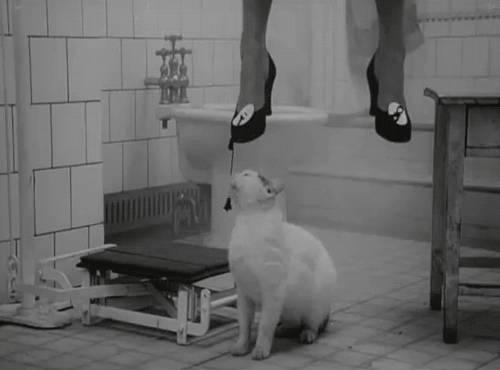 les-chats-sen-foutent-votre-vie