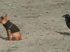 decollage-dun-chien