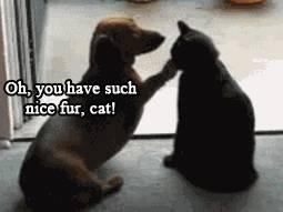 chien-chat-belle-fourrure