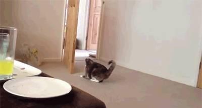 chat-grimpe-porte