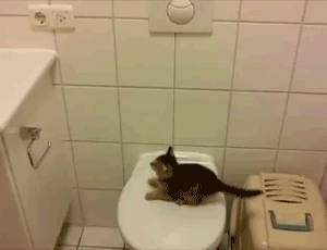 chaton-toilettes-saut-fail