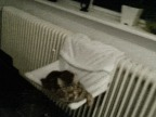 emmerder-chat-quand-baille