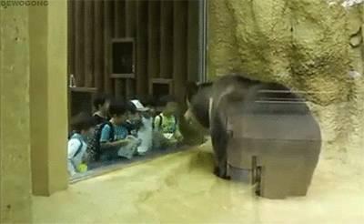 gif-ours-danse