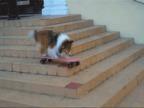 gif-chien-skate-escaliers