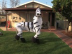 danse-zebre