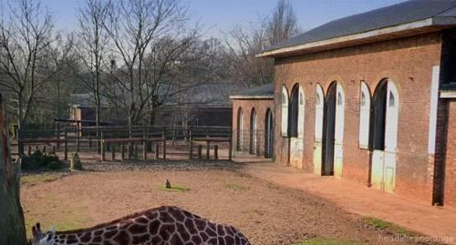 girafe-curieuse