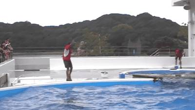 dauphins-passe-balle