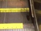 souris-sur-escalator