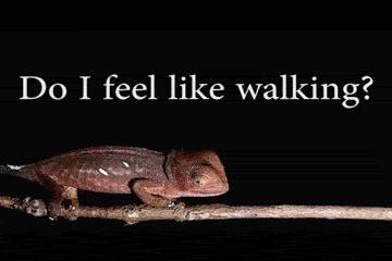 je-marche-ou-pas