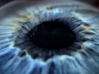 oeil-detail-cosmos
