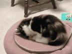 chat-decouvre-portail