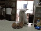 maman-chat-apprend-ses-petits-battre