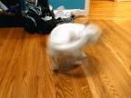 chien-tourne-queue