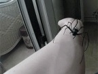une-araignee-sur-bras
