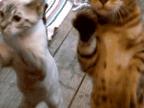 jai-oublie-comment-fait-chat